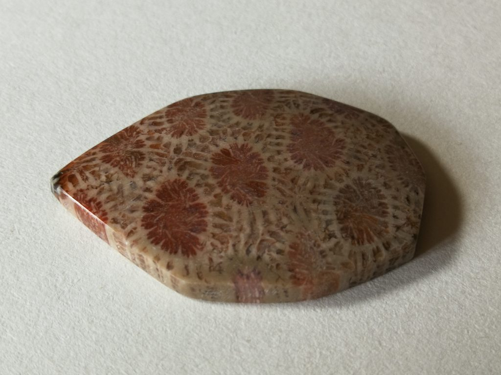 Red Fossil Coral  $16-