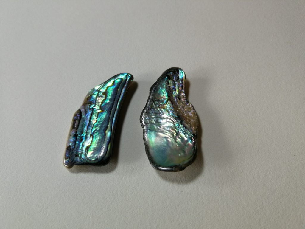 Paua Shells $13- pair