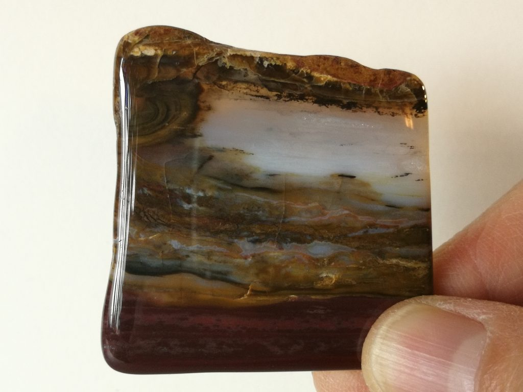 Petrified Wood  $12-  SOLD