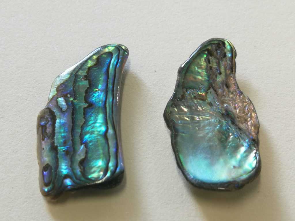 Paua Shells $13- pair