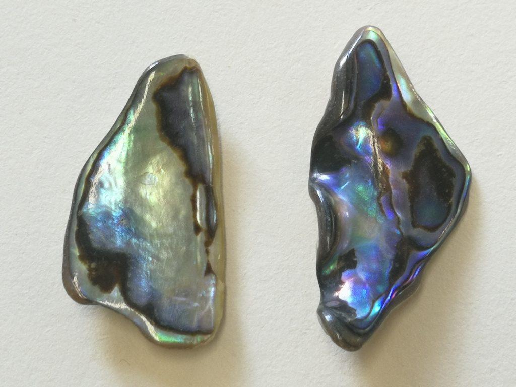 Paua Shells  $13-